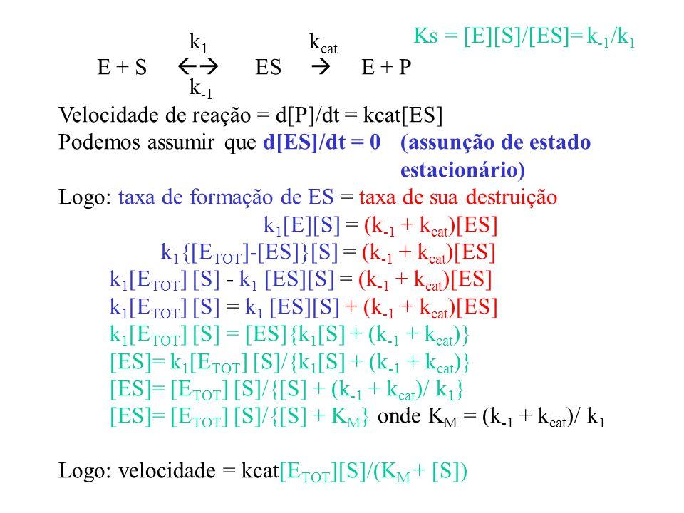 Ks = [E][S]/[ES]= k-1/k1 k1. kcat. E + S  ES  E + P. k-1. Velocidade de reação = d[P]/dt = kcat[ES]